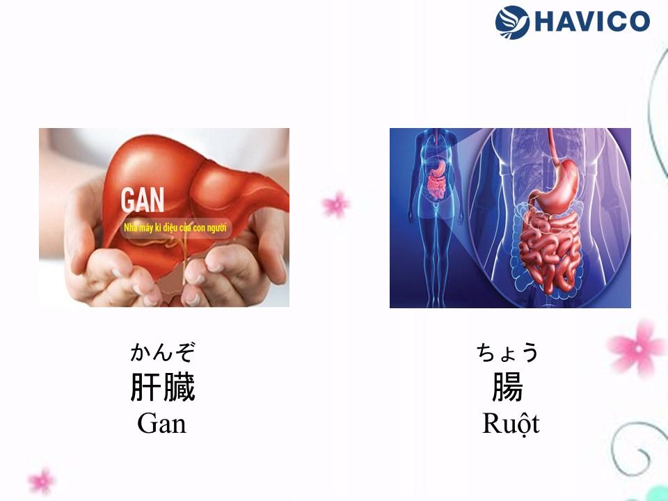 Từ vựng tiếng Nhật chủ đề Bộ phận cơ thể