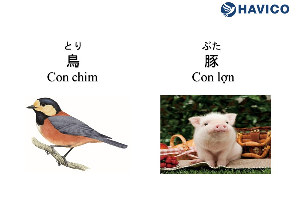 Từ vựng tiếng Nhật: Chủ đề động vật