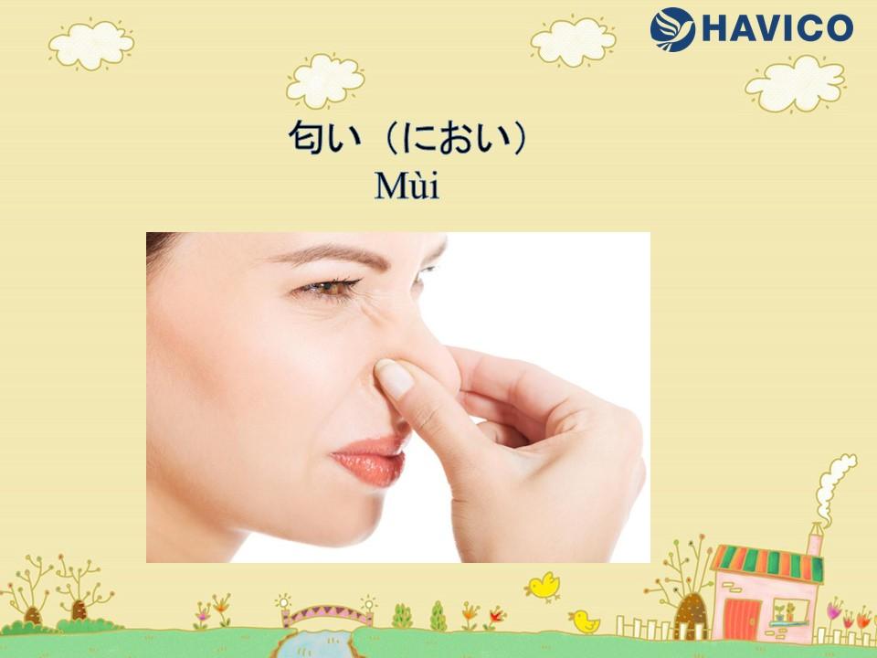 Từ vựng tiếng Nhật: Chủ đề mùi vị