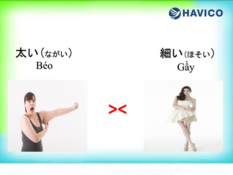 Cặp tính từ trái nghĩa trong tiếng Nhật N5